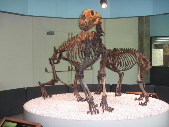 Panthera Atrox, American Lion, Giant Jaguar,Smilodon, California fossils, Prehistoric big cats, extinct cats, Saber-tooth Cat, Saber-tooth Tiger, Fossils, science, Pleistocene, La brea tar pits, Page Mueseum, Travel,