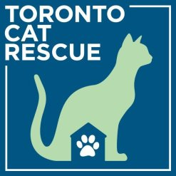 Toronto Cat Rescue, charities, Cat Charities, Christmas donations, giving back, helping cats,