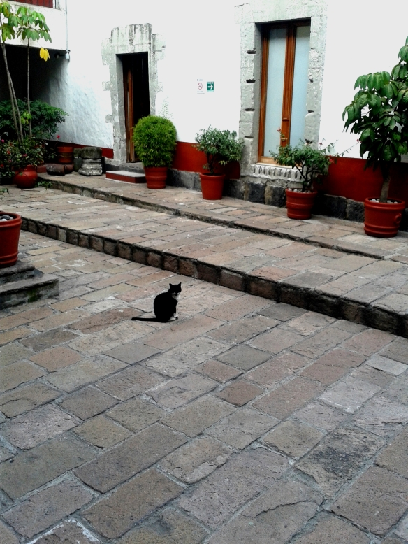 cats, university for cats, mexico, university in mexico that rescues cats, TNR, Cats on campus, teaching students compassion for animals, Universidad del Claustro de Sor Juana, treating cats with respect, caring for community cats, cats around the world,