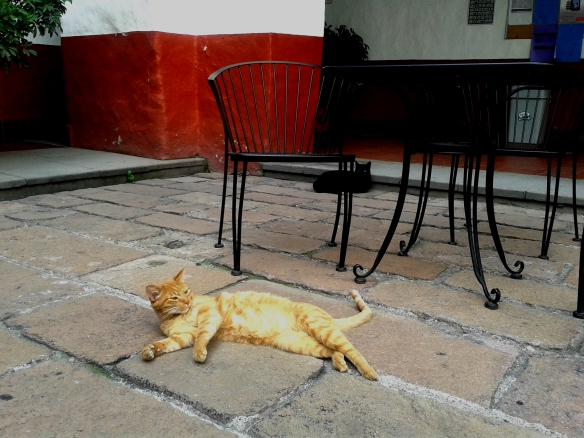 cats, university for cats, mexico, university in mexico that rescues cats, TNR, Cats on campus, teaching students compassion for animals, Universidad del Claustro de Sor Juana, treating cats with respect, caring for community cats, cats around the world, TNR works,