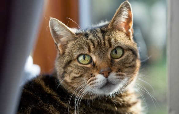 Working Cats, Feral Cats, Cats in a coal mine, UK, Kellingley Colliery, Cats retired from a coal mine, Cats in history, cats helping man, caring for working cats, cats who worked in a coal mine