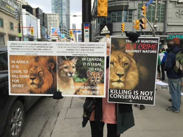 Cecil the lion, Rally for Cecil, Worldwide rally for cecil, rally to ban sport hunting, rally to ban trophy hunting, save lions, year of the lion, save big cats, save mountain lions, Big cats in Canada, Big cats in USA, killing is not conservation, Toronto