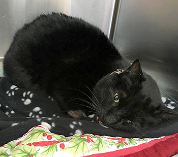 cat rescue, Kevin the black cat, Cat men, Cat heroe, Roadside Rescue, Burnaby, British Columbia, trucker saves cat, black cats, real men love cats, cats are family, cats are forever, Good samaritan rescues cat, Dennis McDonald, Compassion in action