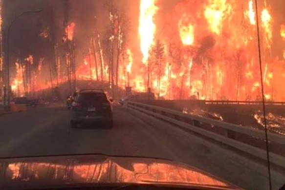 Alberta, Fort McMurray, Wildfires, Pet rescue, climate change, cat rescue, animal rescue, Canada, Natural disasters,