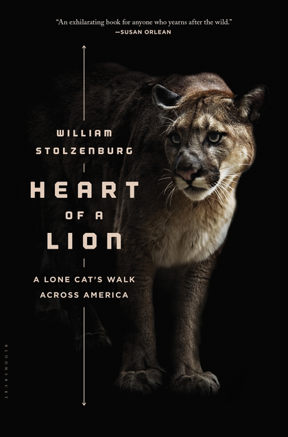 Heart of a Lion A Lone Cat's Walk Across America, William Stolzenburg, Mountain Lions, Pumas, Eastern Cougar, Book Review, Heart of a Lion, big cats of north america, American Lion, save pumas, Mountain Lions journey to find love,