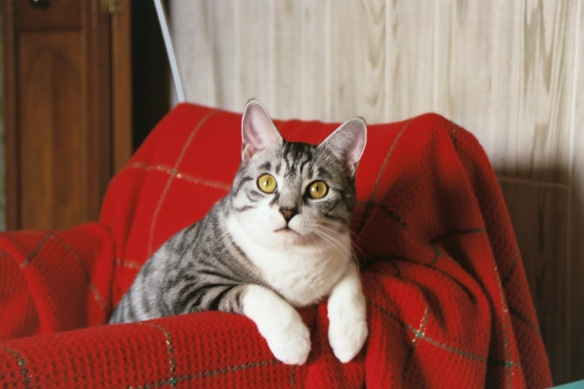 cats, pet loss, pets with cancer, cats with cancer, saying goodbye, cats are family, adopt don't shop,