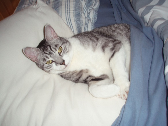 cats, pet loss, pets with cancer, cats with cancer, saying goodbye, cats are family, adopt don't shop, silver tabby,