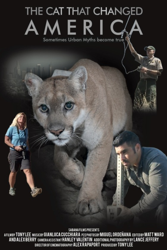 The Cat that Changed America, Documentary,Tony Lee, film festivals,P-22, Mountain Lions, Los Angeles, LA, Hollywood hills cougar, Save LA Cougars, Wildlife Crossing, Save Mountain Lions, Urban Wildlife, Griffith Park, Living with Wildlife,