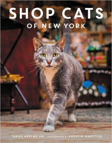 Buy it GIve it, Cats, Christmas gifts, gifts for cat lovers, unique cat themed gifts, Olive & Rye, holiday gifts, big cats, Buy it GIve it, Cats, Christmas gifts, gifts for cat lovers, unique cat themed gifts, Books, Cat books, Shop Cats of New York, Cat Photography