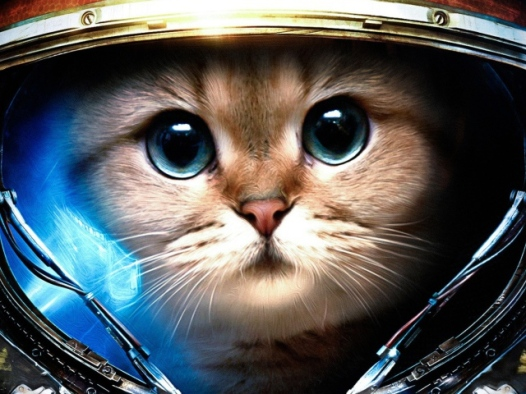 cats, cats in space, early space exploration, space programs, animals in space,