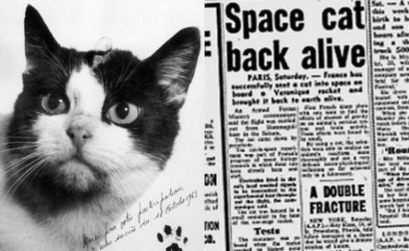 Félicette, the first cat in space, cats in space, animals in space,