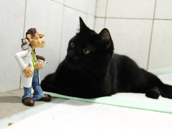 cats, black cats, cats as healers, cat nurse, Lyutsik,Russia, animal clinic, cat heroes, healing paws, PK Perm, cats and dogs