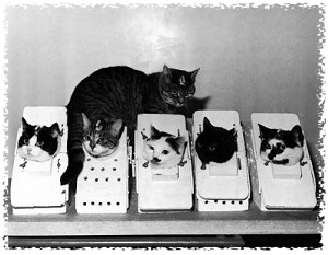 Félicette, the first cat in space, cats in space, animals in space, animals used in research, cats used in research