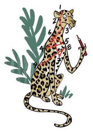 Leopards, spots, spotted cats, big cats, wildlife, cool facts about cats, How the Leopard got its spots, Zambia, Africa,