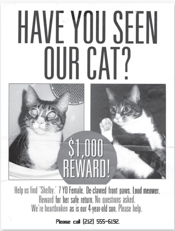 lost cats, the secret of lost cats, missing pets, lost cat posters, Nancy Davidson