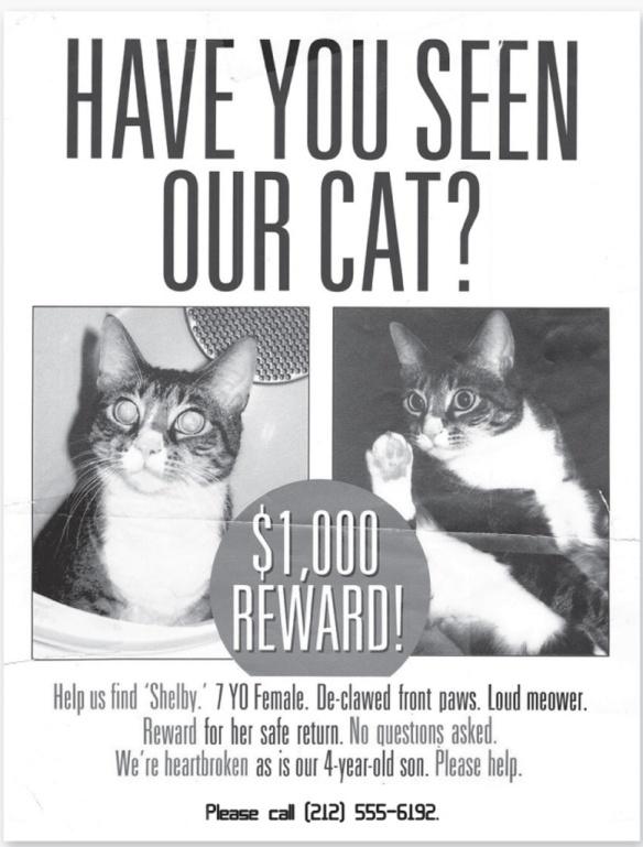 Lost Cat Poster Famous Cat 2018