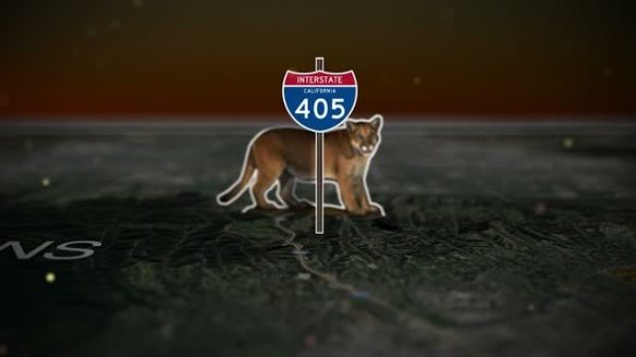 The Cat that Changed America, Documentary,Tony Lee, film festivals, P-22, Mountain Lions, Los Angeles, LA, Hollywood hills cougar, Save LA Cougars, Wildlife Crossing, Urban Wildlife, Griffith Park, Living with Wildlife,