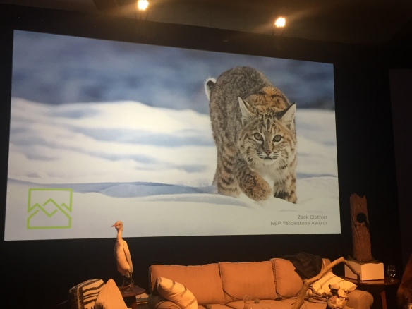Jackson Hole, Wildlife Film Festival, Conservation Summit, Big Cats, Wild Cats, Jackson Lake Lodge, Grand Teton National Park