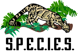 S.P.E.C.I.E.S, clouded leopards, neofelis nebulosa, Sunda Clouded leopard, Project Neofelis, endangered species, Carvinores.org, Anthony Giordano, wild cats, small cats, Borneo, Sumatra, Indochinese leopard