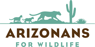 Arizonans for Wildlife, mountain lions, bobcats, jaguars, ocelots and lynx, trophy hunting, trapping, animal cruelty, wildcats, ban trophy hunting, ban trapping, ban hounding, endangered species, The Humane Society of the United States, conservation