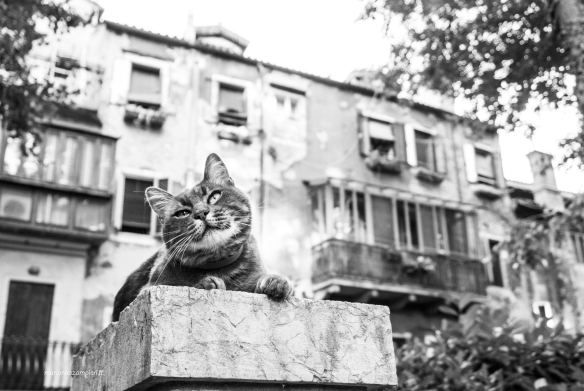 Marianna Zampieri, Photography, Italy, Weddings, Cat Photography, Brides and Cats, Cats in Venice, Photography, Cats at Work