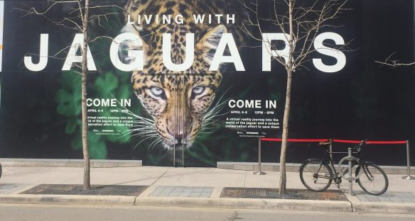 Living with Jaguars, TIFF, Motherboard, Virtual Reality, Endangered Species, Big cats, Brazil, Pantanal, living with wildlife