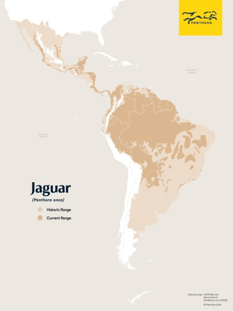 Living with Jaguars, TIFF, Motherboard, Virtual Reality, Endangered Species, Big cats, Brazil, Pantanal, living with wildlife, Panthera Jaguar Project, Jaguar Corridors,