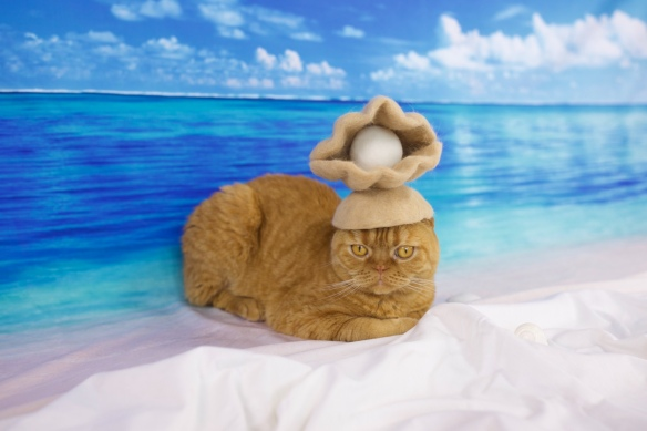 Ryo Yamazaki, rojiman, cats in hats, cat hair, Japan, scottish folds