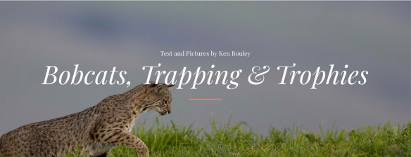 Wyoming Untrapped, Ken Bouley, Bobcats, Trophy hunting, wildlife conservation, wildlife photography