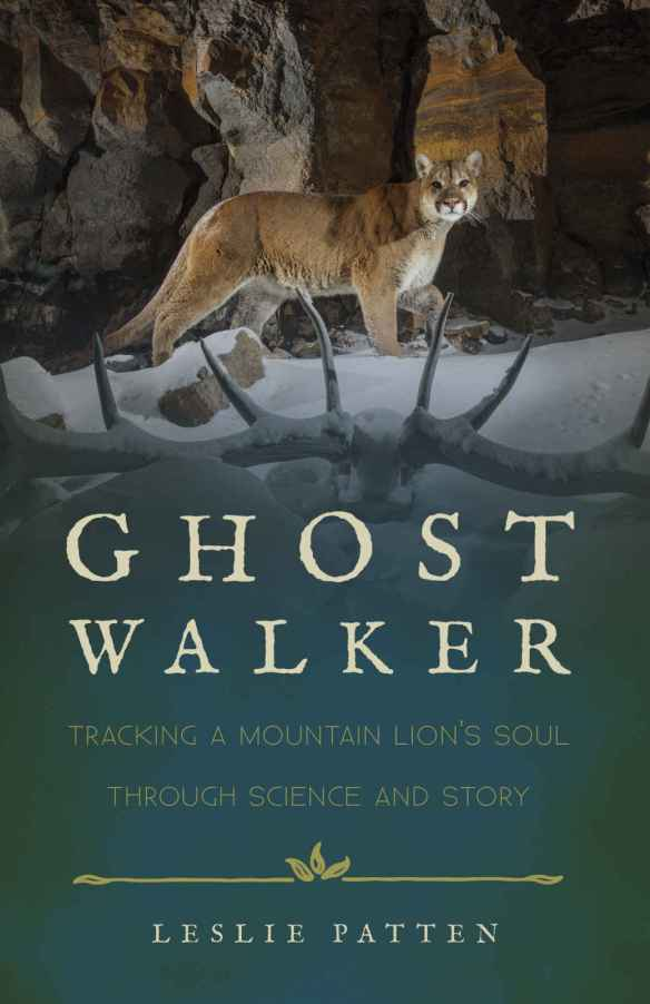 Ghost Walker, Leslie Patten, Mountain Lions, Cougars, Pumas, California, Wyoming, Yellowstone, Panthera Teton Cougar Project, American lions,