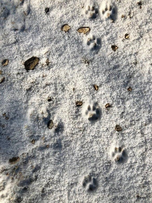Lars Begert, Wildlife photography, Camera Trapping, Switzerland, Jura Mountains, Wildcat Monitoring Switzerland, Europen Wild Cat, Iberian Lynx, Bobcats, conservation